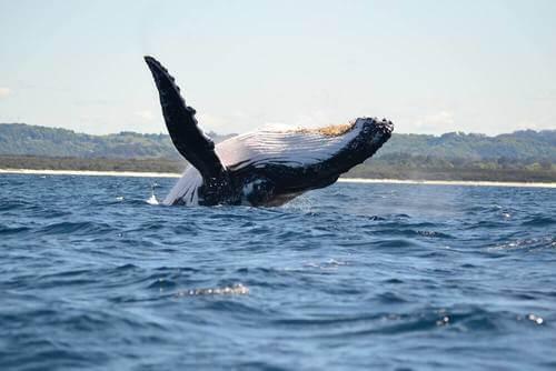Respirazione delle balene