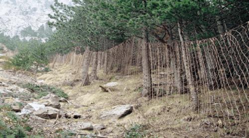 Rete tesa tra gli alberi per la cattura di animali selvatici.