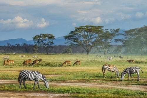 6 curiosità sulla savana africana