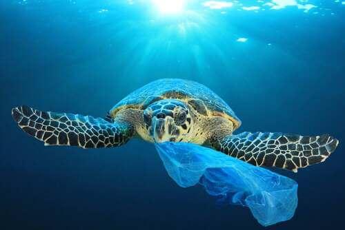L'effetto devastante del cambiamento climatico sulle tartarughe