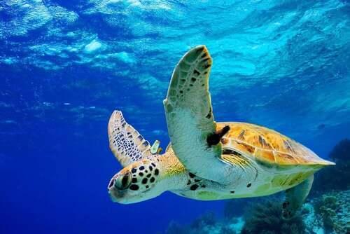 Gli animali a rischio di estinzione in America Centrale