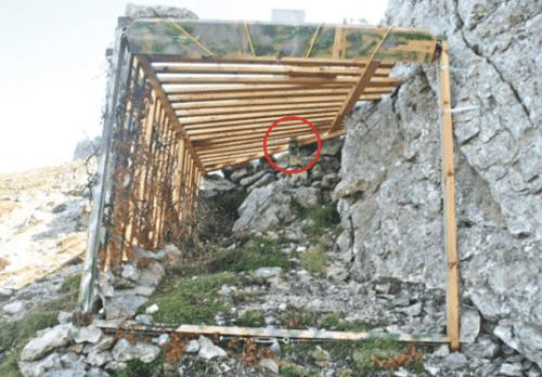 Trappola di legno piazzata per catturare uno stambecco.
