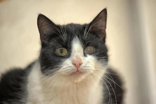 Trattamento del glaucoma nei gatti