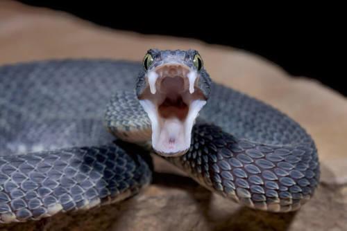 Gli animali più letali del mondo: ecco quali sono