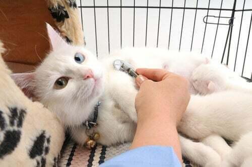 Gatto con costipazione