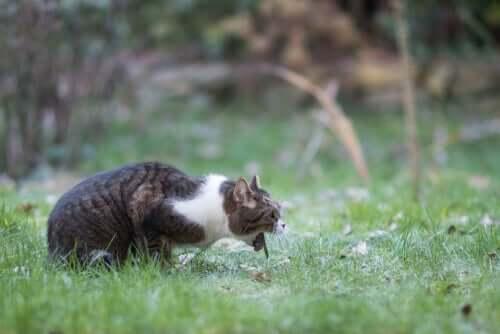 Vomito acuto nel gatto: cause e soluzioni