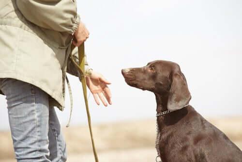 Addestratore di cani