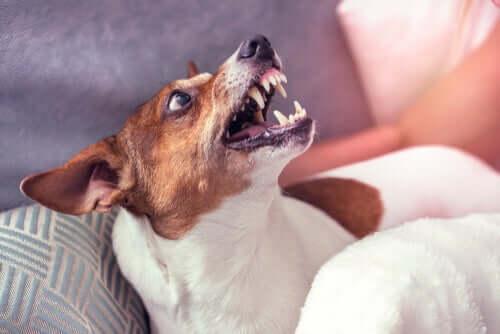 per rieducare un cane aggressivo è necessario rivolgersi a un professionista