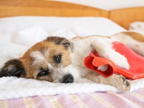 Mal di stomaco nei cani: segni e sintomi