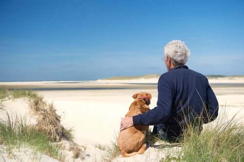 3 problemi di salute nei cani anziani