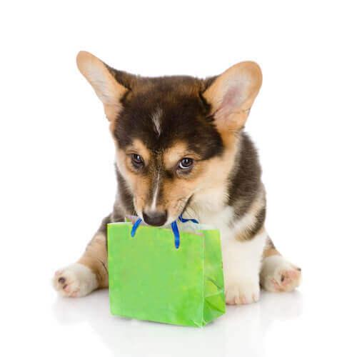 Cucciolo con un sacchetto regalo