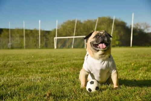Animali e sport, aspetti legali e riforme