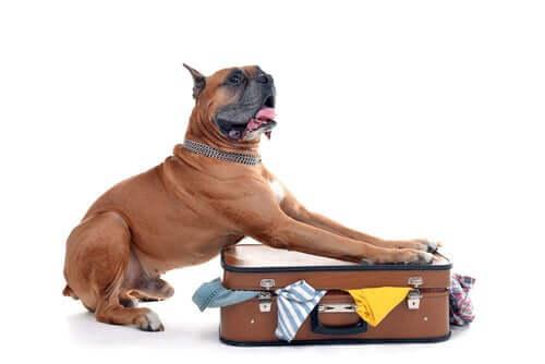Formalità legali per attraversare la dogana con un cane