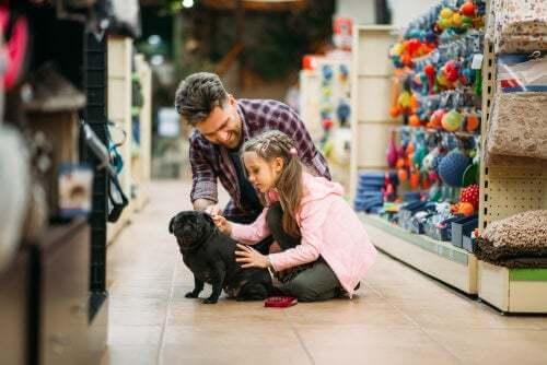 Comprare un cane di razza: come evitare le truffe
