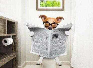 Metodi per contenere la diarrea nei cani