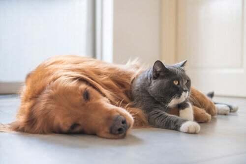 Cane e gatto sdraiati sul pavimento