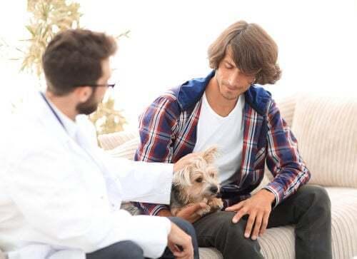 L'iperparatiroidismo nei cani: sintomi e trattamento