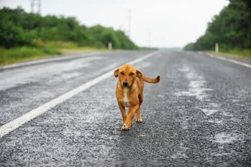 Cane vaga in mezzo alla strada