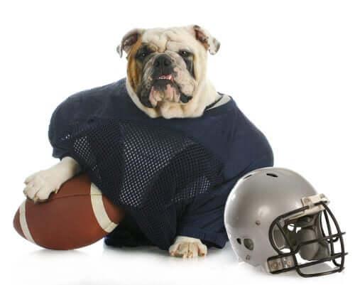 Cane giocatore di rugby