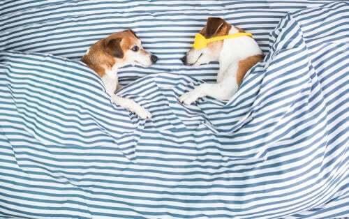Cani a letto