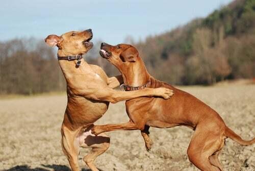 Cambiamenti nel comportamento del cane: perché avvengono?