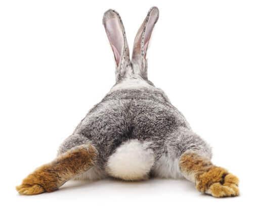 Il vostro coniglio ha la diarrea: che fare?
