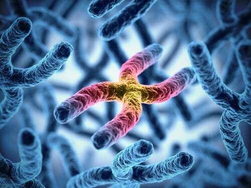 I cromosomi influenzano la longevità del cane