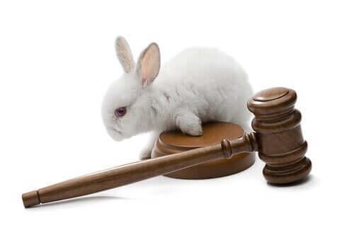 Diritti per la protezione animali