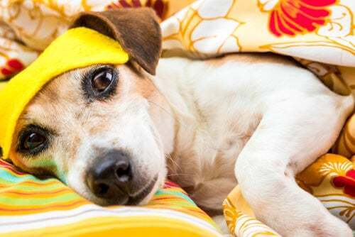 I cani possono soffrire di disturbi del sonno?