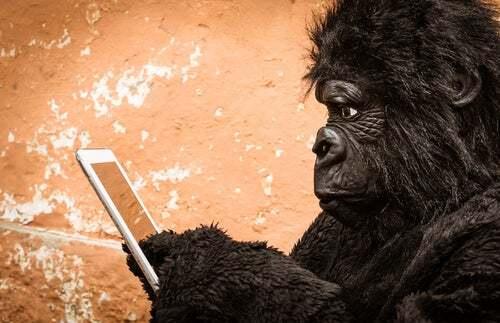 Evoluzione della scimmia