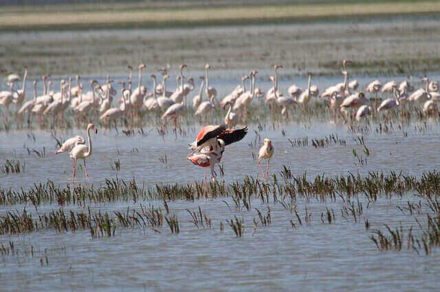 la rete Natura 2000 garantisce la conservazione di numerose specie di uccelli