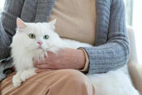 Come cambia il comportamento di un gatto che invecchia
