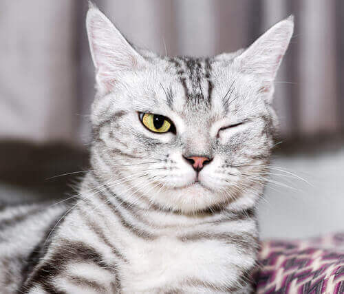 i problemi oculari nei gatti possono essere provocati da un gran numero di cause