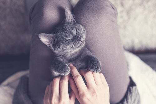 Quanto tempo devono dormire i gatti?