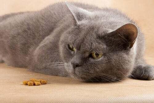 Gatto che non mangia