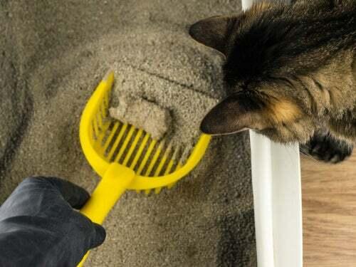 Raccogliere le feci dalla lettiera del gatto
