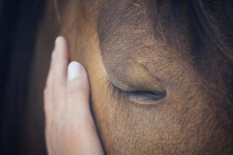 Mano che accarezza un cavallo