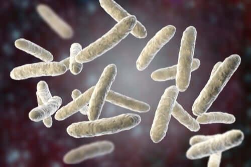 microbioti