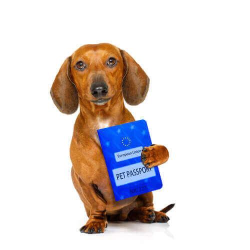 per attraversare la dogana con un cane è necessario il passaporto europeo per gli animali da compagnia