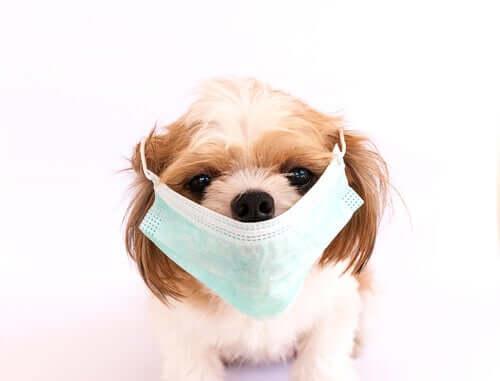 Le patologie canine più contagiose