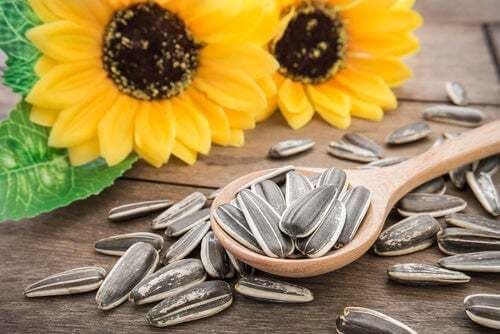 I benefici dei semi di girasole per gli animali domestici