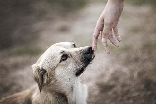 Studi sui cani