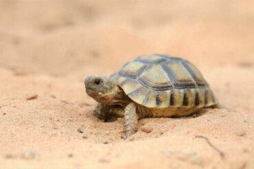 Sapevate che in Spagna vivono ben 5 specie di tartarughe?