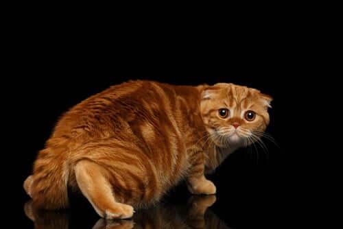 Aiutare un gatto pauroso a superare i suoi timori