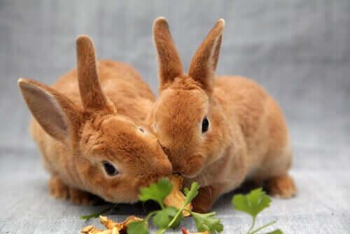 9 cibi che sono pericolosi per i conigli