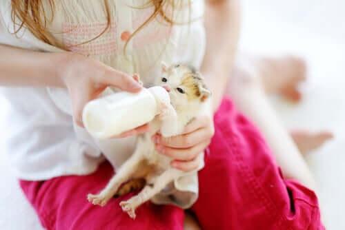 per allattare un cucciolo con il biberon, bisogna utilizzare del latte maternizzato