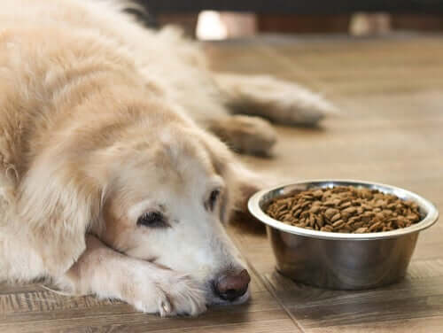 Cane anziano che non mangia