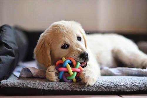 Cucciolo che gioca