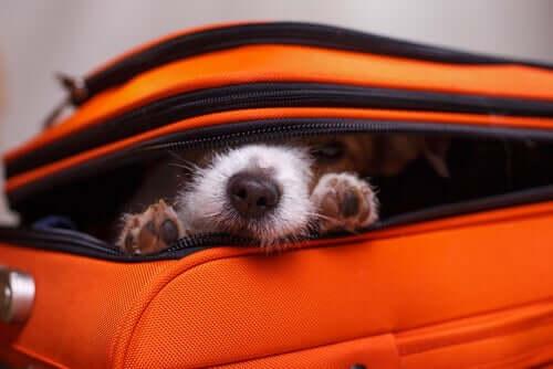 Perché i cani si nascondono?