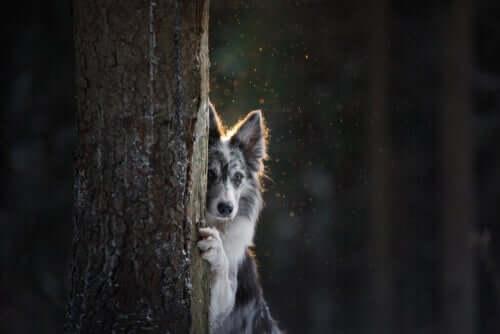 i cani si nascondono per una grande varietà di ragioni